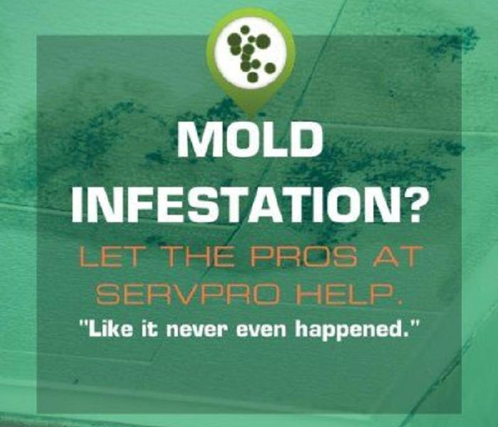 Mold Remediation Van Nuys Residents:  Follow These Mold Safety Tips If You Suspect Mold